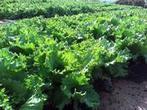 Recyclage des déchets organiques: comment limiter les risques d'écotoxicité pour les sols - CIRAD | AGRONOMIE VEGETAL | Scoop.it