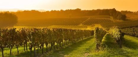 Pesticides, maladies et scandales : les vins de Bordeaux dans l'oeil du cyclone | ATABULA | décroissance | Scoop.it