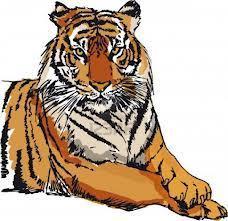 www.tigersports24.com | www.tigersports24.com | Scoop.it