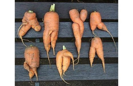 Why Tesco needs to cash in on 'penis-shaped' carrots - Telegraph | @FoodMeditations Time | Scoop.it