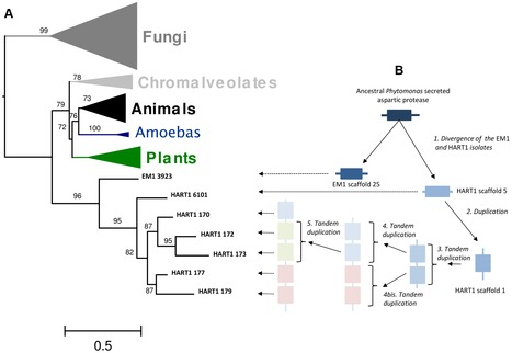 The Streamlined Genome of Phytomonas spp. Relative to Human Pathogenic Kinetoplastids Reveals a Parasite Tailored for Plants | MycorWeb Plant-Microbe Interactions | Scoop.it