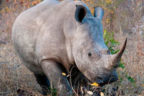 Are Wildlife Declines Fueling Slavery And Armed Conflict?   Animals   Scoop.it