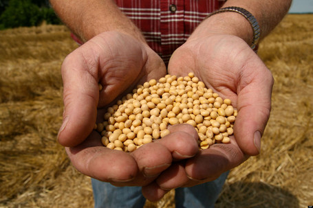 Indiana Farmer Prepares For Legal Battle Against Monsanto | MN News Hound | Scoop.it