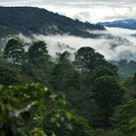 Coffee Farmers Battle Climate Change - The Energy Collective | ecosystem integration | Scoop.it