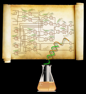 Largest Biochemical Circuit Built Out of Small Synthetic DNA Molecules | Amazing Science | Scoop.it