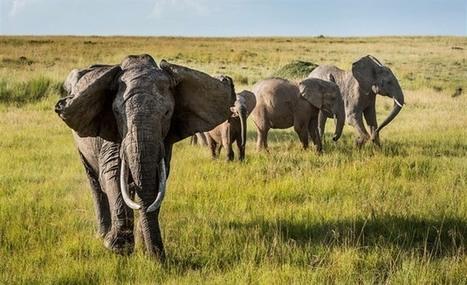 V keňské buši teče sloní krev. Farmáři se symbolu Afriky mstí za útoky - iDNES.cz | Jan Vajda Attorney at Law | Scoop.it