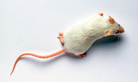 False memory planted in mouse's brain | future health | Scoop.it