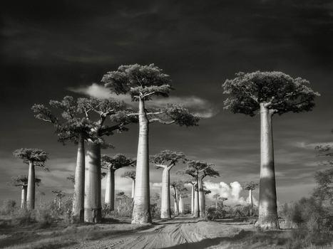 Arbres centenaires : des trésors de biodiversité | Biodiversité | Scoop.it