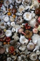 Jeremy Holton - Google+ - In the mushroom season people from our village in NE… | Fine Art at Google+ | Scoop.it
