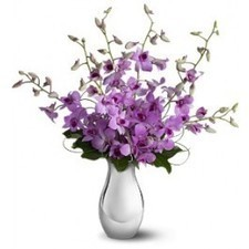 """The elegant bouquet includes six lavender dendrobium orchids delivered in a classic silvery ceramic vase. Bouquet is approximately 21"""" W X 22"""" H. This item is hand-arranged and delivered by a flori... 