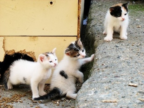 The Extraordinary Lives of Istanbul's Street Cats | Suburban Land Trusts | Scoop.it