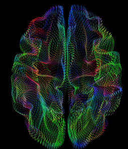 Geometry of Brain's Outer Surface Correlates With Genetic Heritage | Amazing Science | Scoop.it