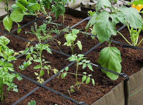 Un jardin potager au balcon | Agriculture urbaine, architecture et urbanisme durable | Scoop.it