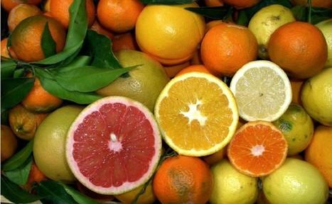 Agrumi. Aperta la via per la Cina | myfruit - frutta e verdura | Scoop.it