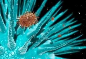 Scientists have crossed two strains of avian flu virus to create one that can be transmitted through the air | Amazing Science | Scoop.it