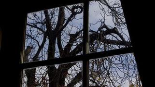 """L'arbre d'Anne Frank replanté en Israël. : Souvenez-vous 6000000   """"Qui si je criais...?""""   Scoop.it"""