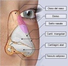 Rinoplastica - Chirurgia estetica naso | | Chirurgia Estetica Plastica | Scoop.it
