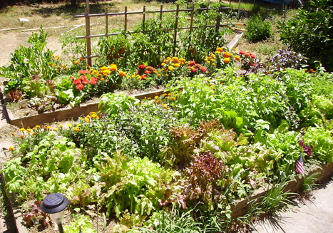Permaculture garden comes to MU | The Snapper: Millersville ... | sustainablehomes | Scoop.it