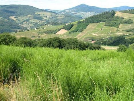 Walking Holiday in Beaujolais, France | Self Guided High Beaujolais Hills | Beaujolais | Scoop.it