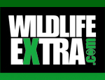 Wildlife Extra News - Mountain gorilla film wins award | The Wild Planet | Scoop.it