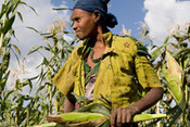 Live Webcast: The Chicago Council's Global Food Security 2013 Symposium | Food Security and Nutrition | Scoop.it