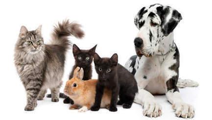 Pour qui votent les animaux? | Mais n'importe quoi ! | Scoop.it
