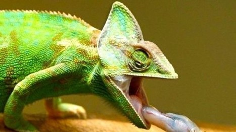 Chameleons migrated from Africa to Madagascar by sea 65 million years ago: new study | The Raw Story | Madagascar Conservation News | Scoop.it