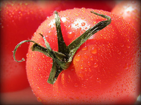 Why the Tomato Was Feared in Europe for More Than 200 Years | Current Events | Scoop.it