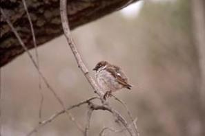 TENGO UNA PREGUNTA | ¿Por qué los pájaros no se caen de las ramas cuando duermen? ~ La Eduteca | FOTOTECA INFANTIL | Scoop.it