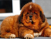 Top 10 funniest looking dog breeds - SheKnows.com | Dog Lovers | Scoop.it