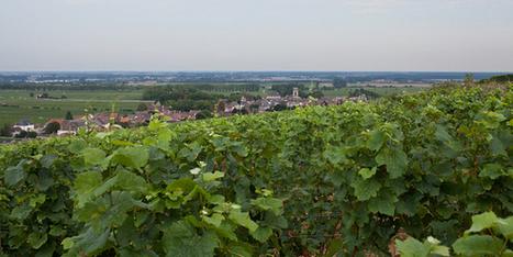 Orages: les vignobles de Pommard et Volnay dévastés en Bourgogne | Le vin quotidien | Scoop.it