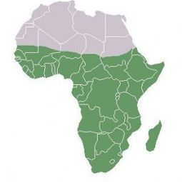 Afrique en marche - Afriquinfos.com | Info Afrique | Scoop.it