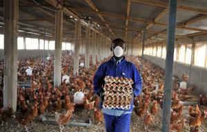 FAO -Nouvelles:Face à la hausse des maladies d'origine animale, il faut une nouvelle approche de santé | Veganisons! | Scoop.it