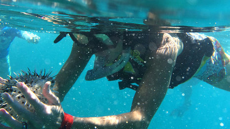 The Sea of Cortez Offers Unforgettable Snorkeling » All Mexico 365 | Baja California | Scoop.it