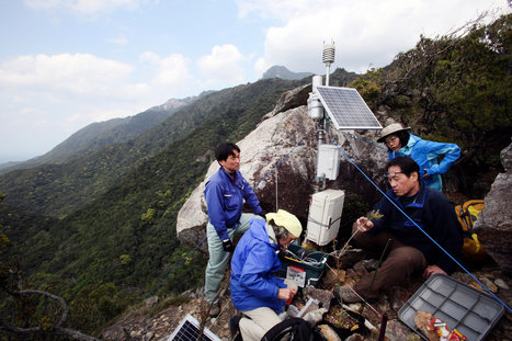Japanese Scientist Blames China for Yakushima's Dying Trees | Sustain Our Earth | Scoop.it