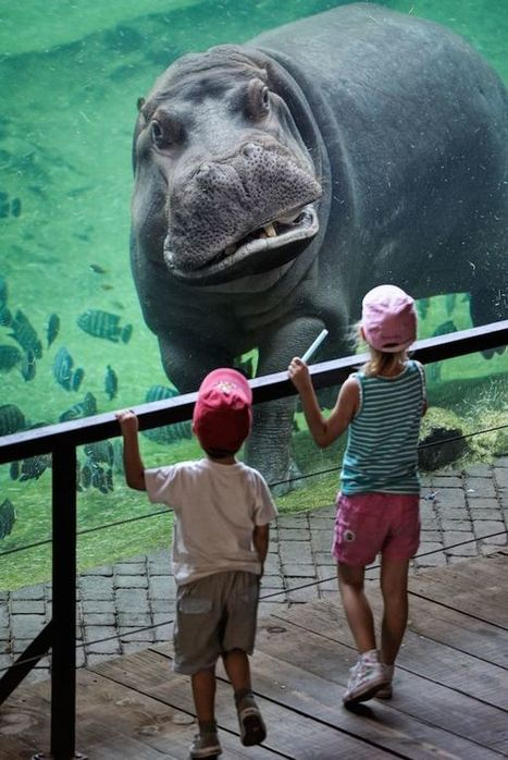 10 Amazing Zoo/Aquarium Animal and Human Interactions | Strange days indeed... | Scoop.it