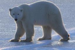 IUCN Red List 50 | Vivre Nature | Scoop.it
