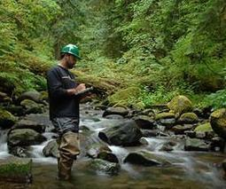'Watering the forest for the trees' emerging as priority for forest management | Sustain Our Earth | Scoop.it