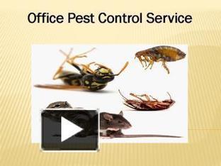 Office Pest Control Service | Commercial Pest Control | Scoop.it