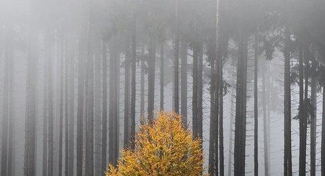 Primer árbol con su propia cuenta en Twitter | Actualidad forestal cerca de ti | Scoop.it