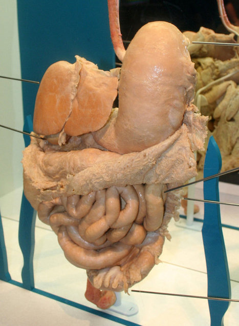 Symptoms: Digestive System - Your Body Weight | Health and Fitness | Scoop.it