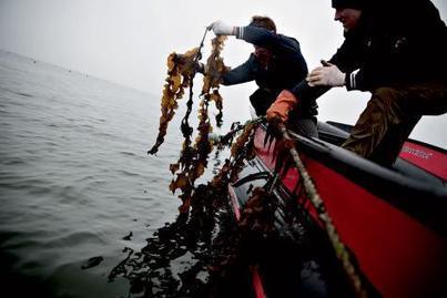 Les algues comme ressources écologiques - Le Soir   The Blue Industrial Revolution   Scoop.it