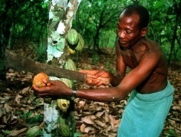 Why cheap chocolate eggs are bad for us – and terrible for poor cocoa farmers - The Guardian | Chocolate Recipes & Finds | Scoop.it