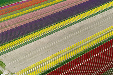 Flying over the Tulip Fields in the Netherlands | SNOWMAN LOL | Scoop.it
