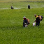 Pesticides : les preuves du danger s'accumulent   Bio & Terroir du Maroc   Scoop.it