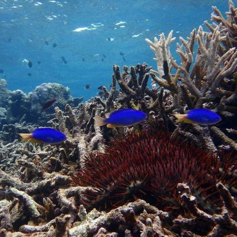 Qld Government buys $7m cattle station in bid to protect Barrier Reef | Lorraine's Environmental Change &  Management | Scoop.it
