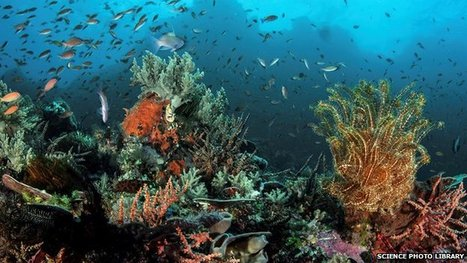 #Ocean #medicine hunt: A Wild West beneath the waves? - BBC News | Rescue our Ocean's & it's species from Man's Pollution! | Scoop.it