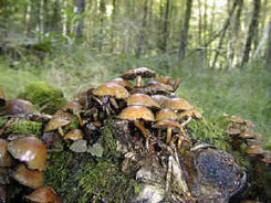 The importance of fungi | Bacteria and Fungi | Scoop.it