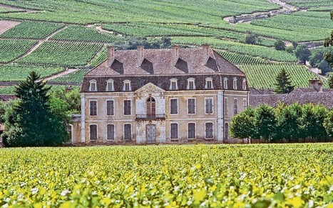 Burgundy: the wine that makes grown men cry - Telegraph | Burgundy Flavour | Scoop.it
