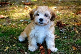 Cute puppy photos competition - Rover Recommended. | Plan a Dog Friendly Holiday | Scoop.it